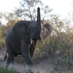 A large bull elephant who didn't like us.