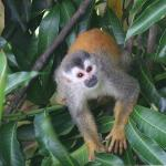 Squirrel monkeys stop by about once a day