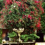 The Old Fountain In the Garden