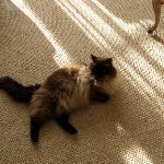 Maui the cat