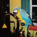 Real MaCaw Bird