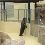 Sealions at Marineland