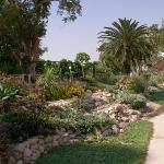 Photo de Kibbutz Ein Gedi