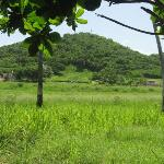 rincon country side
