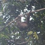 The treehouse's resident sloth!
