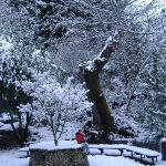 a boy in the park on a winters day
