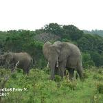 Elephants at Shimba Hills