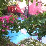 pool and pretty flowers