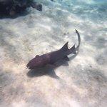 A nurse shark we saw while snorkeling after visiting the Stingray Sandbar.