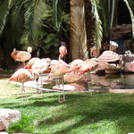 What would the Flamingo Hotel and Casino be without these guys?