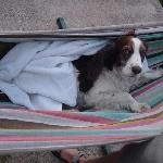 Belle enjoying one of TierraLinda's hammocks