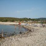 Strand: Wasser ist sauber, Seegras