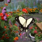 Newport Butterfly Zoo