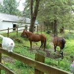 cat & horses, Rhu Gorse