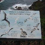 Bird Species at Kilauea Point