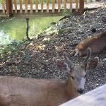 Deer outside of cabin