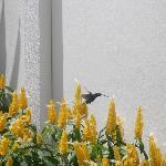 Hummingbird on Yellow Trim