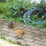 Baby chickens in the garden!!!