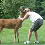 The Brass Ring's tame deer