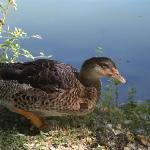 Fauna avícola de la laguna