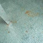 Stained carpet