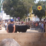 in alcochete town andyes that is a bull it was august lol!!!!!