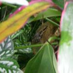 lots of croaking from the plants