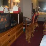 Child and dog roomy