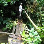 crossing a bridge in the Primary Forest Tour