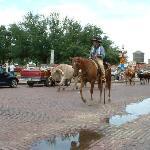 weekend longhorn cattle drive down main street