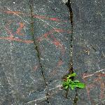 Rock carvings - Ekeberg