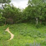 Trail through Eloise Butler Garden