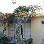 Bloomers garden