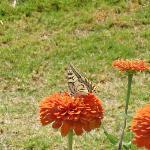 farfalle nel villaggio