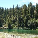 the river and redwoods by the picnic area