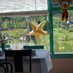 Looking out the dining room window at the Moby Dick Hotel