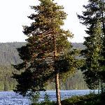 Ostmarka - Lake landscape
