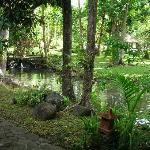 Fish pond in front of room
