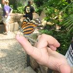 Niagara Parks Butterfly Conservatory (Vinterträdgård och fjärilszoo)