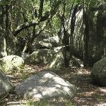 bosque prehistorico