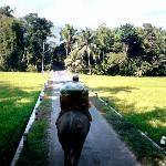 Elephant ride from Borobudur back to Amanjiwo