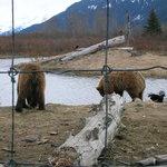 Bears-April 30, 2006