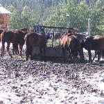 Horses Fueling Up