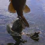 Snapper grabs bass