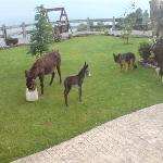Baby donkey, born during our stay