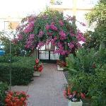 Garden Lefka