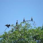 Wildlife along the Rio Dulce River