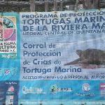 Area Sea Turtle conservation program