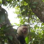 Monkeys can be seen every day