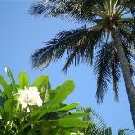 Plumeria tree's & Palms around the pool area...